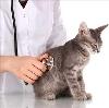 Ветеринарные клиники в Кослане